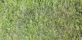 Modello di siepe verde — Foto Stock