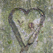 Heart carved in tree — Stock Photo