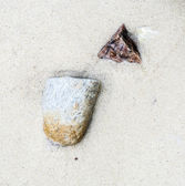 Detail of shells at the beach — Stock Photo