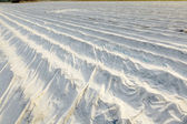 Fields are covered with foil to protect plants from frost — Stock Photo