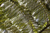 Bright fern leaves in tropical garden — Stock Photo