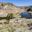 Hot springs at hot creek geological site — Stock Photo #41590591