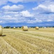 Bale of straw on fields with blue sky — Stock Photo #41829923
