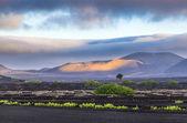 Extinguished volcanoes in Timanfaya National Park — Stock Photo
