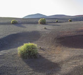 Volcanic landscape in national park Timanfaya — Stock Photo