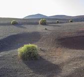 Volcanic landscape in national park Timanfaya  — Stock Photo