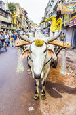 Ox cart transportation on early morning in old Delhi — Stock Photo