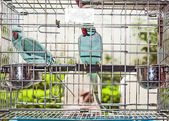 Birds in a cage at the birds market in Hongkong — Stockfoto