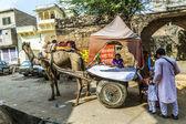 Táxi camelo, em pushkar — Fotografia Stock