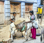 Indian female worker loads the donkey with sand — Stock Photo