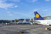 Lufthansa Aircrafts standing at the terminal 1 — ストック写真