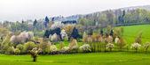 Sisin içinde çiçek açan ağaçlar ile yeşil vadi — Stok fotoğraf