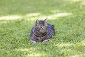 Cute cat relaxes in the garden — Stock Photo