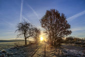 Sunrise in winter with hoar frost in the fields and blue sky — Stockfoto