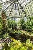 Palms inside the palmengarten  — Stock Photo