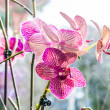 Pink orchid branch — Stock Photo #50431995