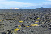 Sparse vegetation at volcanic stones in Lanzarote with volcano — Stock Photo