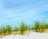 Grass grows at dune at a beautiful beach — Stock Photo