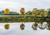 Reflection of trees in river tauber — Stock Photo