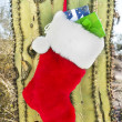 Christmas stocking on cactus - Stock Photo