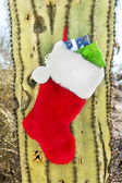Christmas stocking on cactus — Stock Photo