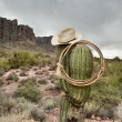 Lasso on cactus - Stock Photo