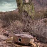 在沙漠中的空水壶 — 图库照片