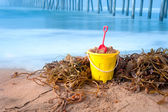Beach bucket and kelp — Stock Photo