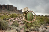 Lasso on cactus — Stock Photo