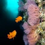 California reef — Stock Photo #29310631