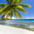 Exotic beach with palm tree — Stock Photo #50907999