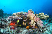 Colorful tropical reef with corals — Stock Photo