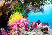 Exotic Coral Reef — Stock Photo