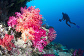 Coral reef and diver — Stock Photo