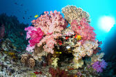 Vibrant coral reef — Stock Photo