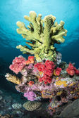 Green tropical coral — Stock Photo