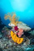 Yellow sponge and sea fan — Stock Photo