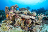 Colorful coral reef — Stock Photo