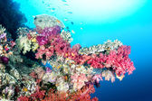Colorful tropical reef — Stock Photo
