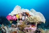 Coral head — Stock Photo