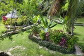 Tropical resort garden — Stock Photo