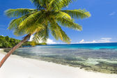 Exotic beach with palm tree — Stock Photo