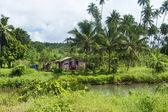 Rustic shack in jungle — Stock Photo