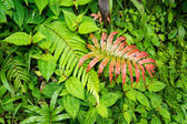 Beautiful fern leafs — Stockfoto