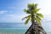 Palm tree against sky — Stock Photo