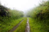 Dirt road in rain — Stock Photo