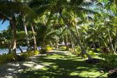 Tropical walking pathway — Stock Photo