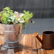 Potted plant and watering can — Stock Photo #26279177