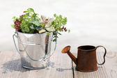 Plant with a watering can — Stock Photo