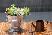 Potted plant and watering can — Stock Photo